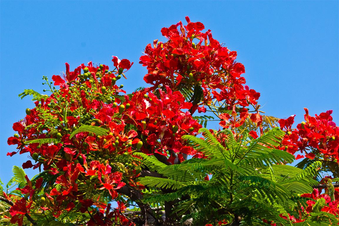 Life After HP - 3/05 - Maui Flora